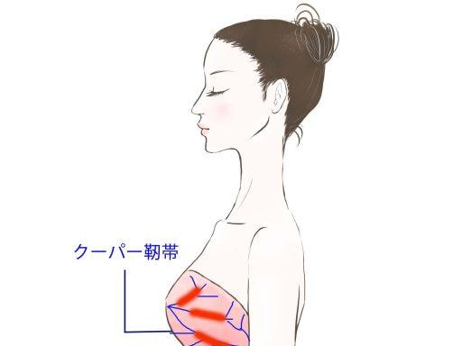 クーパー靱帯と乳腺の解説